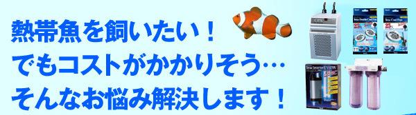熱帯魚を飼いたい!でもコストがかかりそう…そんなお悩み解決します!